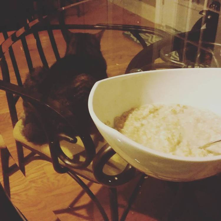 oatmeal and kitty